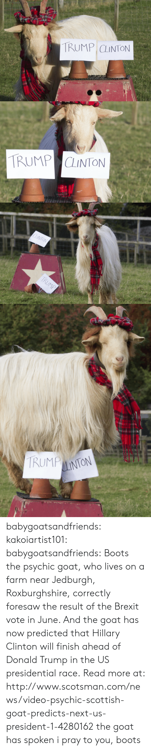 Trump Clinton: TRUMP CLINTON   TRUMP CLINTON   CLINTON  TRUMP   TRUMP  LINTON babygoatsandfriends:  kakoiartist101:  babygoatsandfriends:    Boots the psychic goat, who lives on a farm near Jedburgh, Roxburghshire, correctly foresaw the result of the Brexit vote in June. And the goat has now predicted that Hillary Clinton will finish ahead of Donald Trump in the US presidential race.Read more at: http://www.scotsman.com/news/video-psychic-scottish-goat-predicts-next-us-president-1-4280162    the goat has spoken  i pray to you, boots