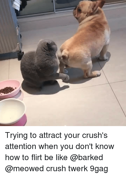 9gag, Be Like, and Crush: Trying to attract your crush's attention when you don't know how to flirt be like⠀ @barked @meowed crush twerk 9gag