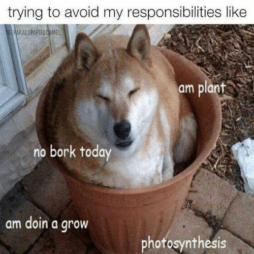 Dank, Photosynthesis, and Today: trying to avoid my responsibilities like  am plant  no bork today  am doin a groW  photosynthesis