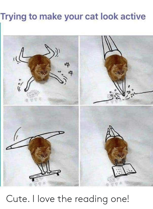 Cat Look: Trying to make your cat look active Cute. I love the reading one!