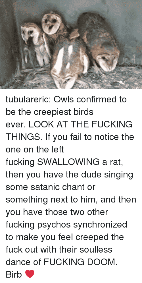 Dude, Fail, and Fucking: tubulareric:  Owls confirmed to be the creepiest birds ever. LOOK AT THE FUCKING THINGS. If you fail to notice the one on the left fucking SWALLOWING a rat, then you have the dude singing some satanic chant or something next to him, and then you have those two other fucking psychos synchronized to make you feel creeped the fuck out with their soulless dance of FUCKING DOOM.  Birb ❤️