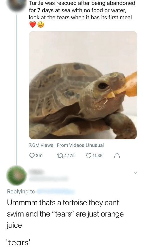 "Facepalm, Food, and Juice: Turtle was rescued after being abandoned  for 7 days at sea with no food or water,  look at the tears when it has its first meal  7.6M views From Videos Unusual  13.4,175  351  11.3K  Replying to  Ummmm thats a tortoise they cant  swim and the ""tears"" are just orange  juice 'tears'"