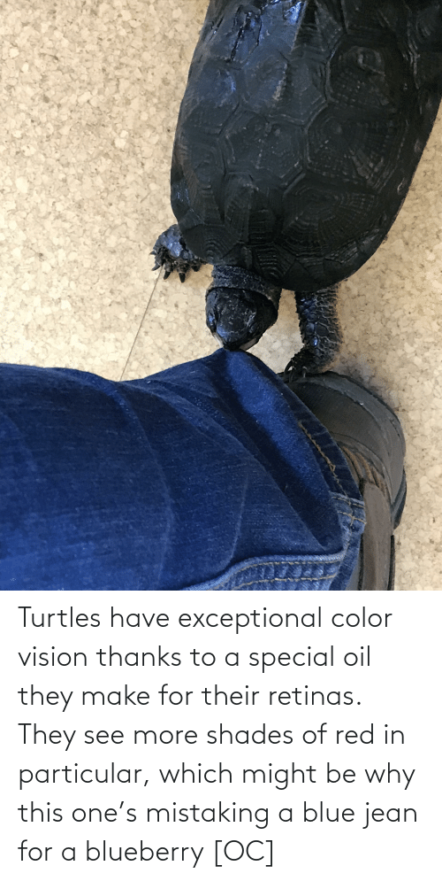 exceptional: Turtles have exceptional color vision thanks to a special oil they make for their retinas. They see more shades of red in particular, which might be why this one's mistaking a blue jean for a blueberry [OC]
