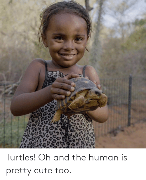 turtles: Turtles! Oh and the human is pretty cute too.
