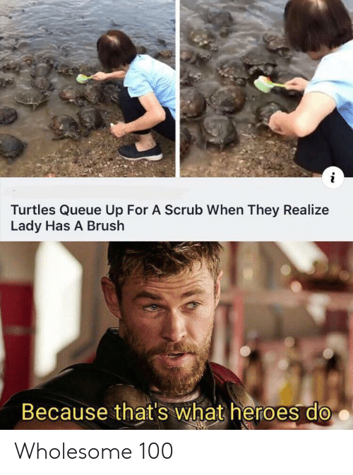 Because Thats: Turtles Queue Up For A Scrub When They Realize  Lady Has A Brush  Because that's what heroes do Wholesome 100