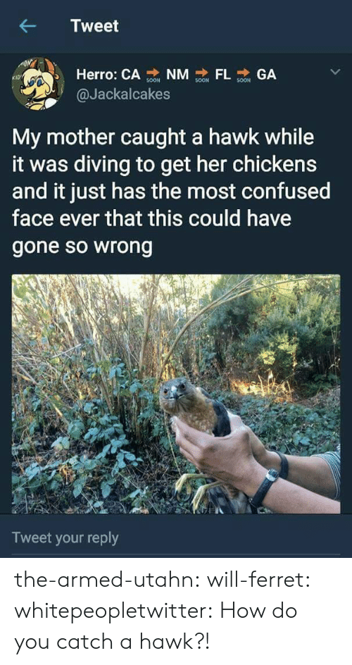 Chickens: Tweet  Herro: CA NM GA  KID  @Jackalcakes  My mother caught a hawk while  it was diving to get her chickens  and it just has the most confused  face ever that this could have  gone so wrong  Tweet your reply the-armed-utahn: will-ferret:  whitepeopletwitter: How do you catch a hawk?!