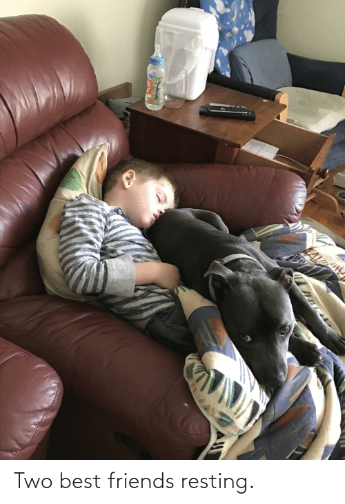 Resting: Two best friends resting.