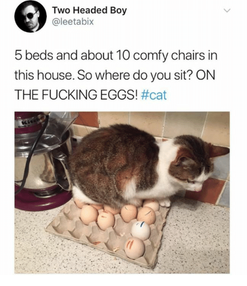 Dank, Fucking, and House: Two Headed Boy  @leetabix  5 beds and about 10 comfy chairs in  this house. So where do you sit? ON  THE FUCKING EGGS!