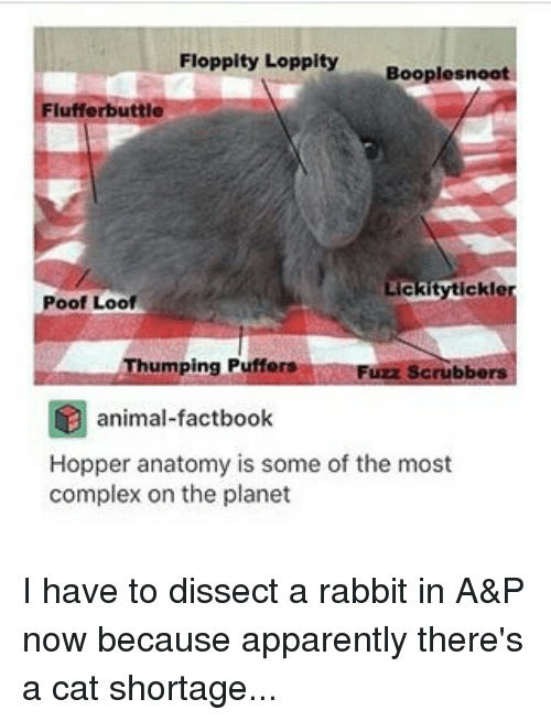 Ty Loppity Booplesnoot Fluffer Buttle Ckler Poof Loof Umping Puffers ...