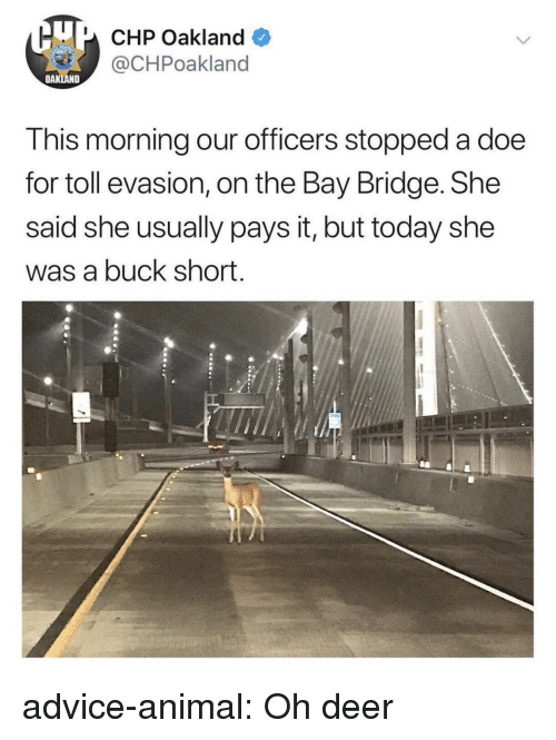 toll: U CHP Oakland  @CHPoakland  OAKLAND  This morning our officers stopped a doe  for toll evasion, on the Bay Bridge. She  said she usually pays it, but today she  was a buck short. advice-animal:  Oh deer