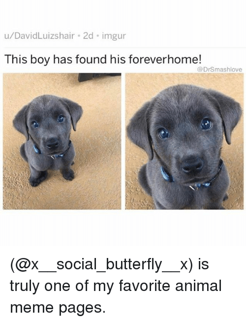 Animal Meme: u/DavidLuizshair 2d imgur  This boy has found his foreverhome!  @DrSmashlove (@x__social_butterfly__x) is truly one of my favorite animal meme pages.