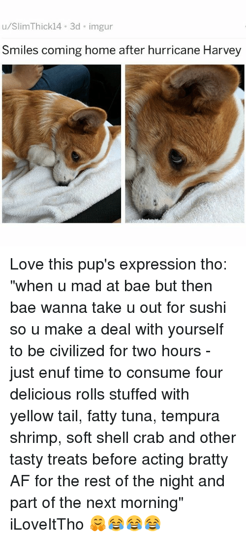 """afs: u/SlimThick14 3d imgur  Smiles coming home after hurricane Harvey Love this pup's expression tho: """"when u mad at bae but then bae wanna take u out for sushi so u make a deal with yourself to be civilized for two hours - just enuf time to consume four delicious rolls stuffed with yellow tail, fatty tuna, tempura shrimp, soft shell crab and other tasty treats before acting bratty AF for the rest of the night and part of the next morning"""" iLoveItTho 🤗😂😂😂"""