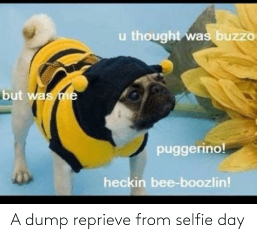 selfie: u thought was buzzo  but was me  puggerino!  heckin bee-boozlin! A dump reprieve from selfie day