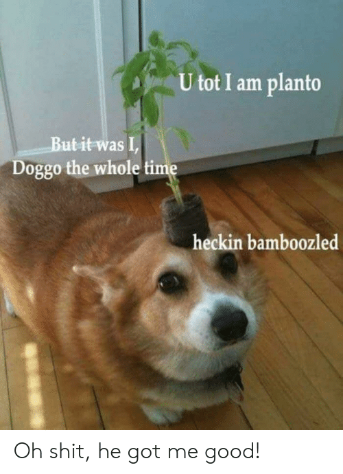 Shit, Good, and Time: U tot I am planto  Butit was I  Doggo the whole time  heckin bamboozled Oh shit, he got me good!