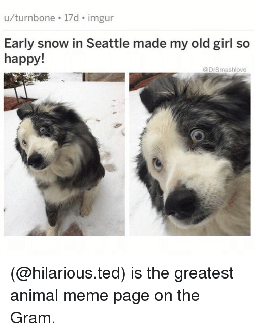 Animal Meme: u/turnbone 17d imgur  Early snow in Seattle made my old girl so  happy!  @DrSmashlove (@hilarious.ted) is the greatest animal meme page on the Gram.