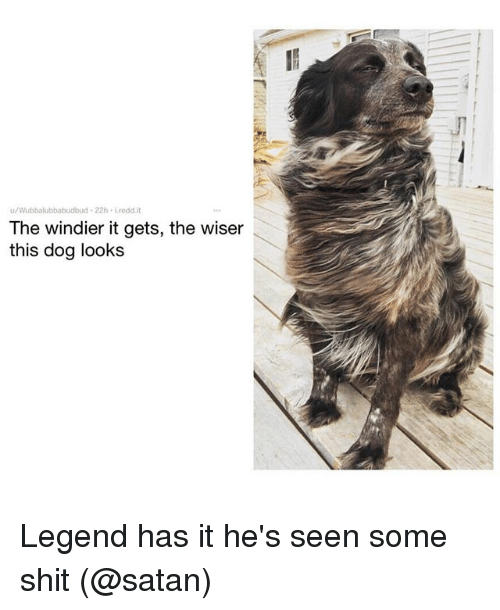 Seens: u/Wubbalubbabudbud 22h Lredd.it  The windier it gets, the wiser  this dog looks Legend has it he's seen some shit (@satan)