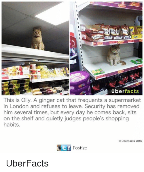 Uber Facts: uber facts  This is Olly. A ginger cat that frequents a supermarket  in London and refuses to leave. Security has removed  him several times, but every day he comes back, sits  on the shelf and quietly judges people's shopping  habits.  UberFacts 2016  GEf Postize UberFacts