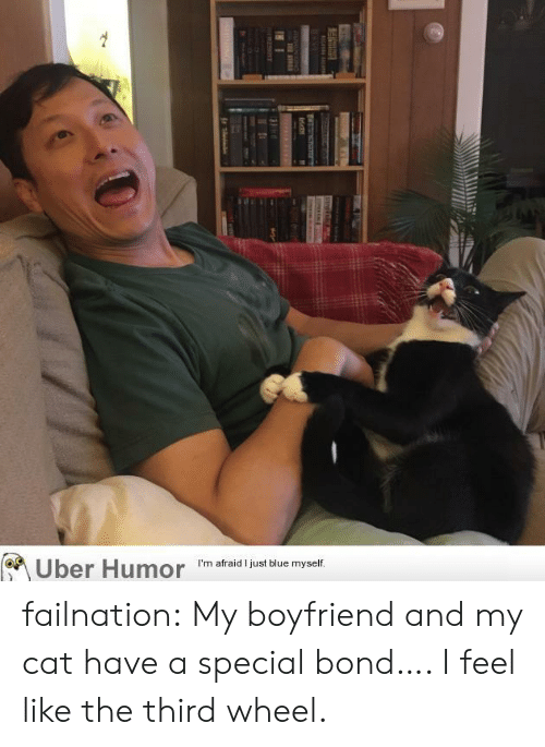 Tumblr, Uber, and Blog: Uber Humor  I'm afraid I just blue myself.  Ire  T ATRE failnation:  My boyfriend and my cat have a special bond…. I feel like the third wheel.