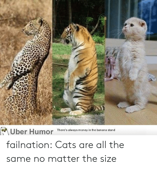 Cats, Money, and Tumblr: Uber Humor  There's always money in the banana stand failnation:  Cats are all the same no matter the size
