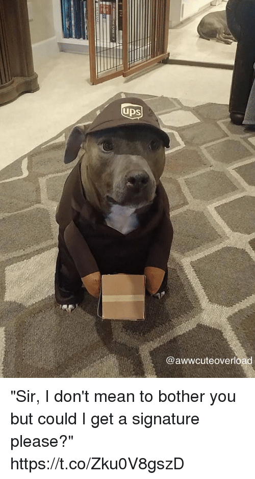 """Mean, Girl Memes, and You: UDS  @awwcuteoverload """"Sir, I don't mean to bother you but could I get a signature please?"""" https://t.co/Zku0V8gszD"""