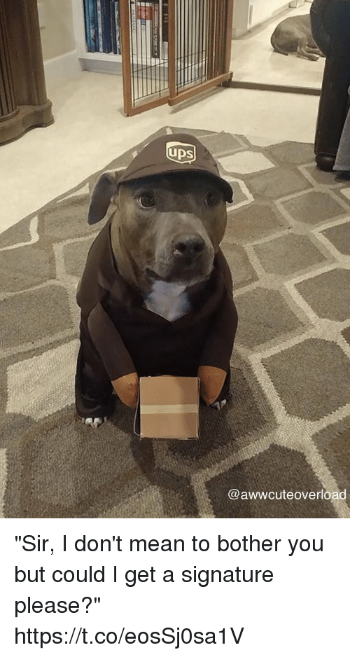 """Mean, Girl Memes, and You: UDS  @awwcuteoverload """"Sir, I don't mean to bother you but could I get a signature please?"""" https://t.co/eosSj0sa1V"""