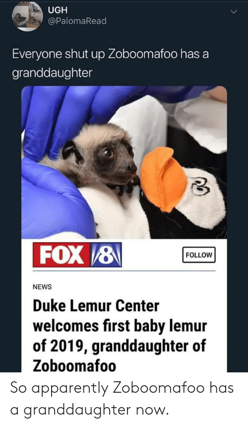 Apparently, News, and Shut Up: UGH  @PalomaRead  Everyone shut up Zoboomafoo has a  granddaughter  FOX /8  FOLLOW  NEWS  Duke Lemur Center  welcomes first baby lemur  of 2019, granddaughter of  Zoboomafoo So apparently Zoboomafoo has a granddaughter now.
