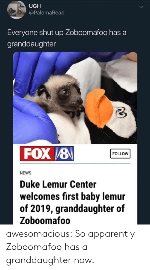 Apparently, News, and Shut Up: UGH  @PalomaRead  Everyone shut up Zoboomafoo has a  granddaughter  FOX /8  FOLLOW  NEWS  Duke Lemur Center  welcomes first baby lemur  of 2019, granddaughter of  Zoboomafoo awesomacious:  So apparently Zoboomafoo has a granddaughter now.