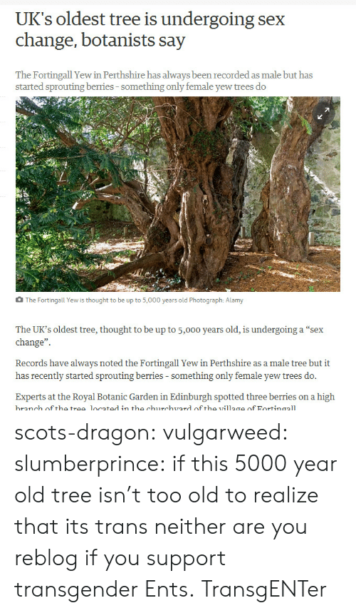 "records: UK's oldest tree is undergoing sex  change, botanists say  The Fortingall Yew in Perthshire has always been recorded as male but has  started sprouting berries-something only female yew trees do  The Fortingall Yew is thought to be up to 5,000 years old Photograph: Alamy  The UK's oldest tree, thought to be up to 5,000 years old, is undergoing a ""sex  change""  Records have always noted the Fortingall Yew in Perthshire as a male tree but it  has recently started sprouting berries - something only female yew trees do.  Experts at the Royal Botanic Garden in Edinburgh spotted three berries on a high  branch off the trae located in the churchvard of tho village of Fortinaall scots-dragon: vulgarweed:  slumberprince:  if this 5000 year old tree isn't too old to realize that its trans neither are you  reblog if you support transgender Ents.  TransgENTer"