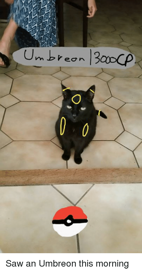 umbreon: Umbreon 13acOp. Saw an Umbreon this morning
