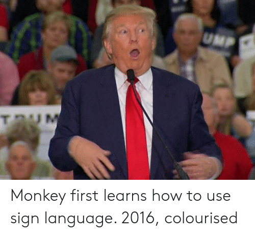 ump: UMP Monkey first learns how to use sign language. 2016, colourised