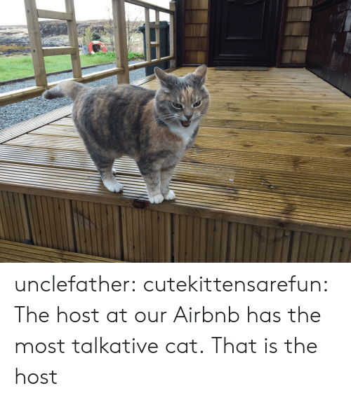 Airbnb: unclefather:  cutekittensarefun: The host at our Airbnb has the most talkative cat.  That is the host