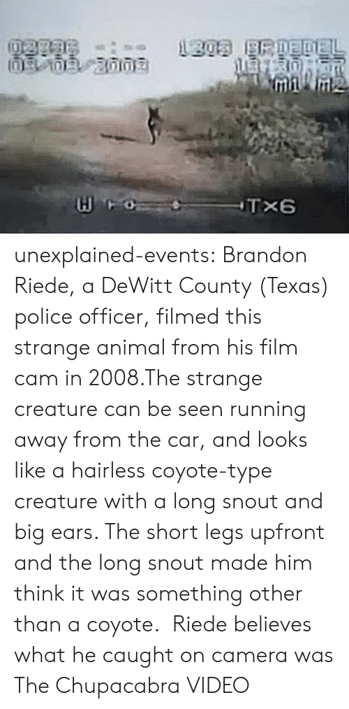 caught on camera: unexplained-events:   Brandon Riede, a DeWitt County (Texas) police officer, filmed this strange animal from his film cam in 2008.The strange creature can be seen running away from the car, and looks like a hairless coyote-type creature with a long snout and big ears. The short legs upfront and the long snout made him think it was something other than a coyote. Riede believes what he caught on camera was The Chupacabra VIDEO