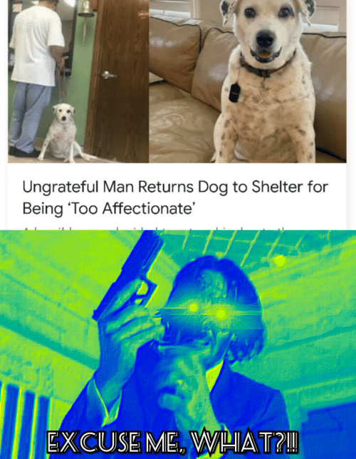 Returns: Ungrateful Man Returns Dog to Shelter for  Being 'Too Affectionate'  EXCUSE ME. WHAT?!