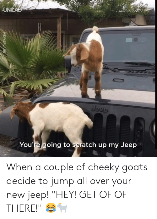 "Dank, Jeep, and Scratch: UNICAD  Jeep  You're going to scratch up my Jeep  NEWSFLARE When a couple of cheeky goats decide to jump all over your new jeep! ""HEY! GET OF OF THERE!"" 😂🐐"
