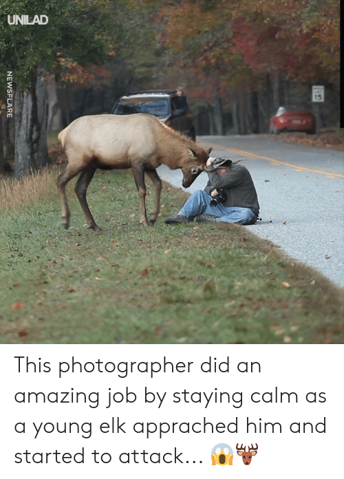 Dank, Amazing, and 🤖: UNILAD  15  NEWSFLARE This photographer did an amazing job by staying calm as a young elk apprached him and started to attack... 😱🦌
