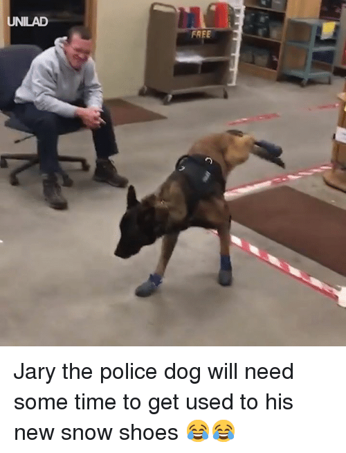 police dog: UNILAD  FREE Jary the police dog will need some time to get used to his new snow shoes 😂😂