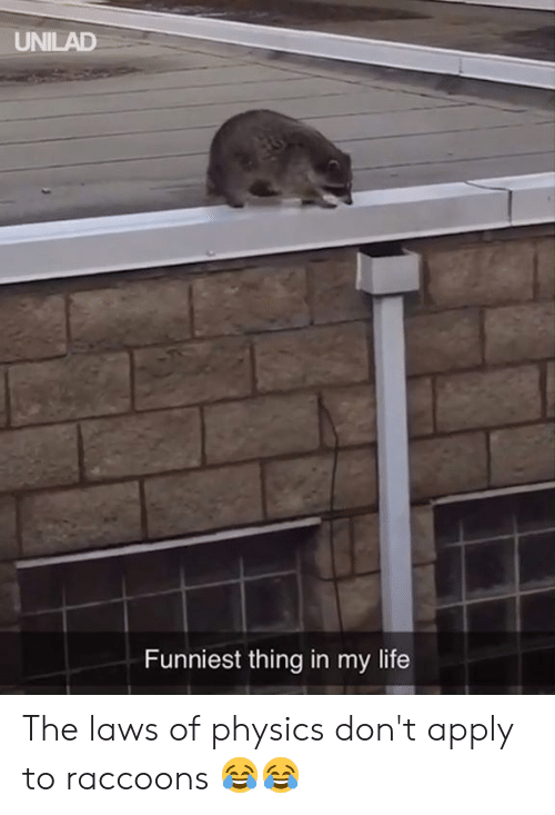 Dank, Life, and Physics: UNILAD  Funniest thing in my life The laws of physics don't apply to raccoons 😂😂