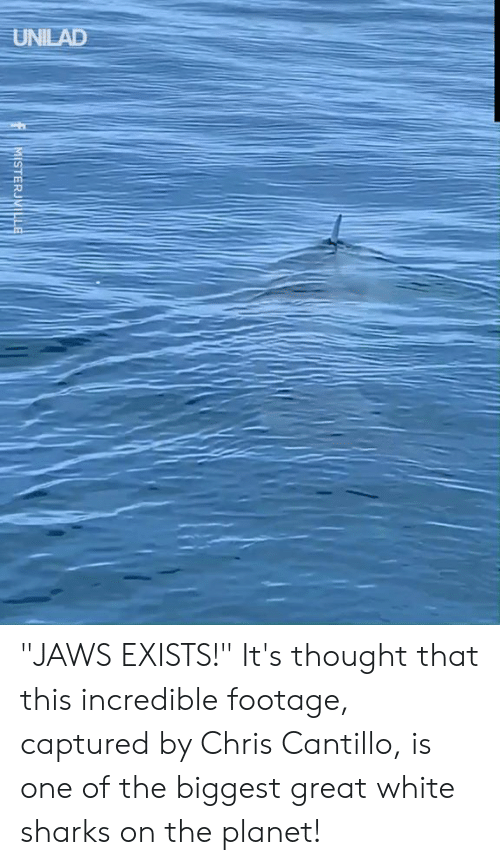 "jaws: UNILAD  MISTERJVILLE ""JAWS EXISTS!""  It's thought that this incredible footage, captured by Chris Cantillo, is one of the biggest great white sharks on the planet!"