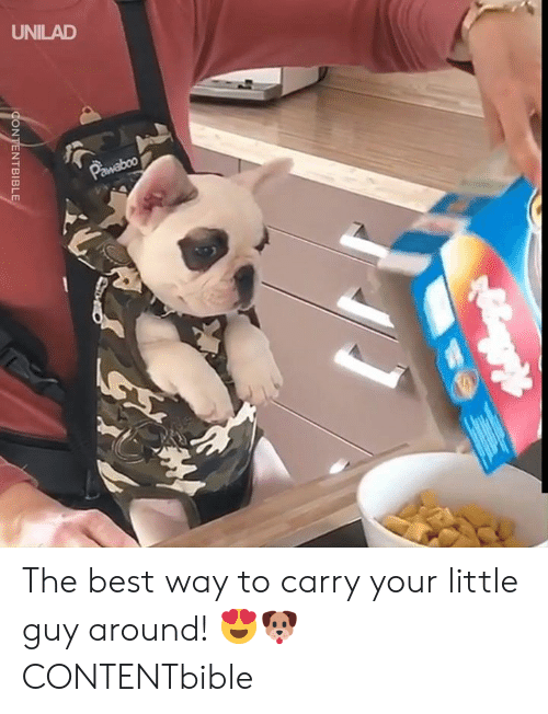 Dank, Best, and 🤖: UNILAD  Pawaboo  CONTENTBIBLE The best way to carry your little guy around! 😍🐶   CONTENTbible