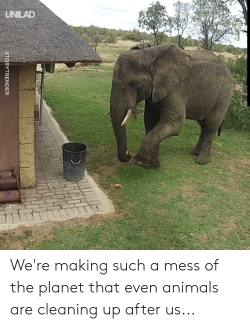 Animals, Dank, and 🤖: UNILAD  STORYTRENDER We're making such a mess of the planet that even animals are cleaning up after us...