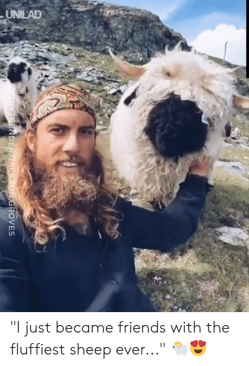 """Dank, Friends, and 🤖: UNILAD  TORYTRENDER/JACKSON.GROVES """"I just became friends with the fluffiest sheep ever..."""" 🐑😍"""