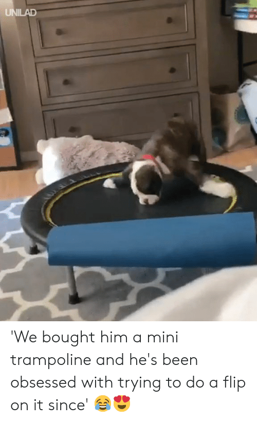 Trampoline: UNILAD 'We bought him a mini trampoline and he's been obsessed with trying to do a flip on it since' 😂😍