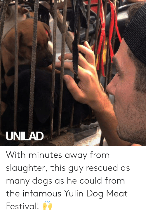 Infamous: UNILAD With minutes away from slaughter, this guy rescued as many dogs as he could from the infamous Yulin Dog Meat Festival! 🙌