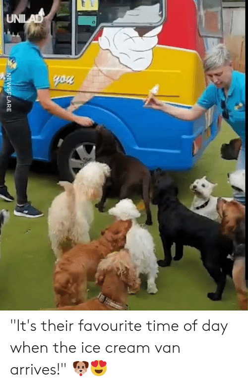 "Dank, Ice Cream, and Time: UNILAD  you  NEWSFLARE ""It's their favourite time of day when the ice cream van arrives!"" 🐶😍"