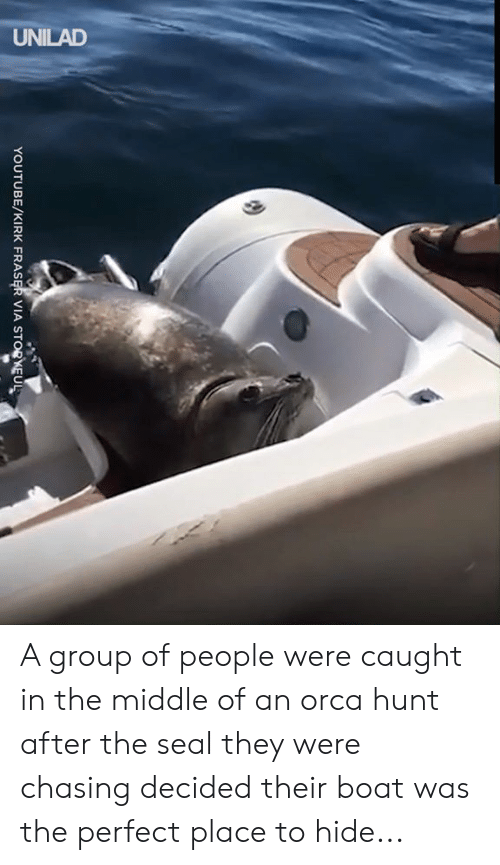 Dank, youtube.com, and Seal: UNILAD  YOUTUBE/KIRK FRASER VIA STORKEUL A group of people were caught in the middle of an orca hunt after the seal they were chasing decided their boat was the perfect place to hide...