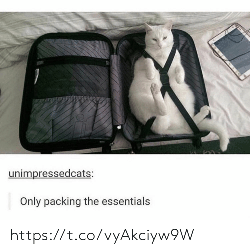 essentials: unimpressedcats:  Only packing the essentials https://t.co/vyAkciyw9W