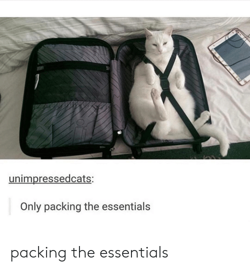 essentials: unimpressedcats:  Only packing the essentials packing the essentials