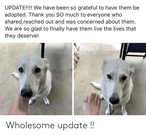 Thank You, Live, and Wholesome: UPDATE!!! We have been so grateful to have them be  adopted. Thank you SO much to everyone who  shared,reached out and was concerned about them.  We are so glad to finally have them live the lives that  they deserve! Wholesome update !!