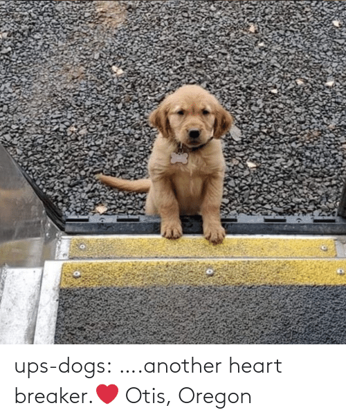 Dogs: ups-dogs:  ….another heart breaker.❤ Otis, Oregon