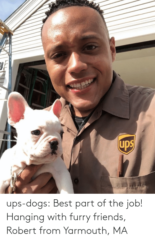 mø: ups-dogs:  Best part of the job! Hanging with furry friends, Robert from Yarmouth, MA